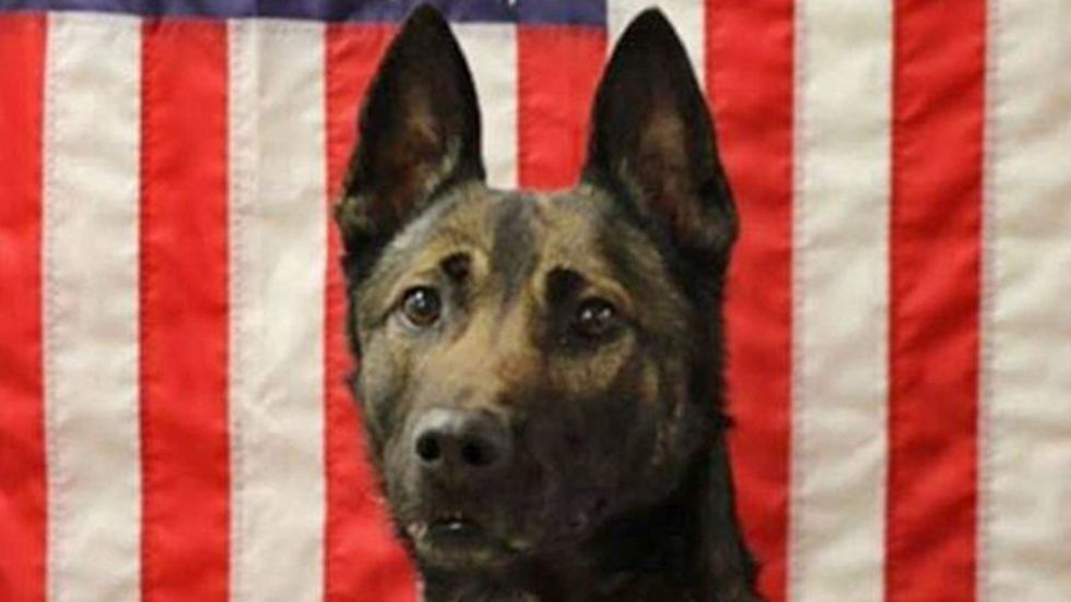 Army Ranger dog dies in Afghanistan saving US soldiers https://t.co/xqHK7Dqfgy https://t.co/Iq1ETiajF3
