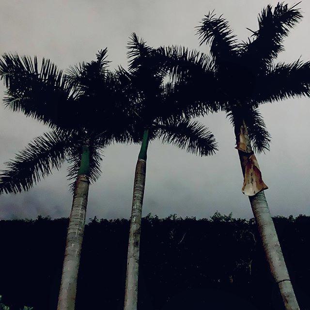 Threeway below palm tree