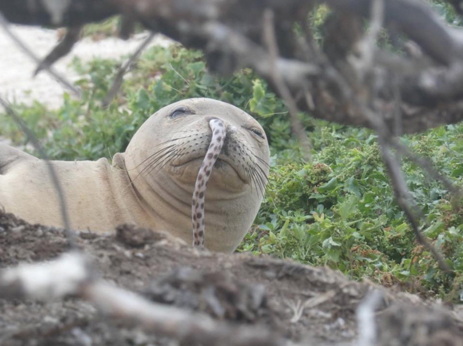 Dumbass seal gets an eel stuck in his nose https://t.co/qIlIXiGL6u https://t.co/P9MLNAGkWE