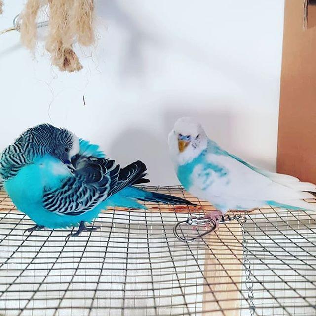 vogel malvorlagen terbaik
