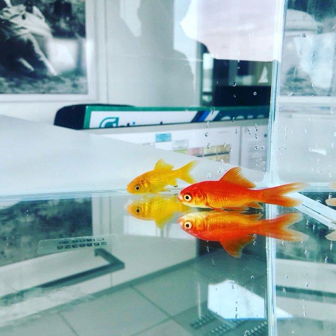 🐠 En ce #JeudiPhoto, on voulait vous présenter les poissons @Fnac et @Darty_Officiel 😍 Bonne journée à tous ! Photo