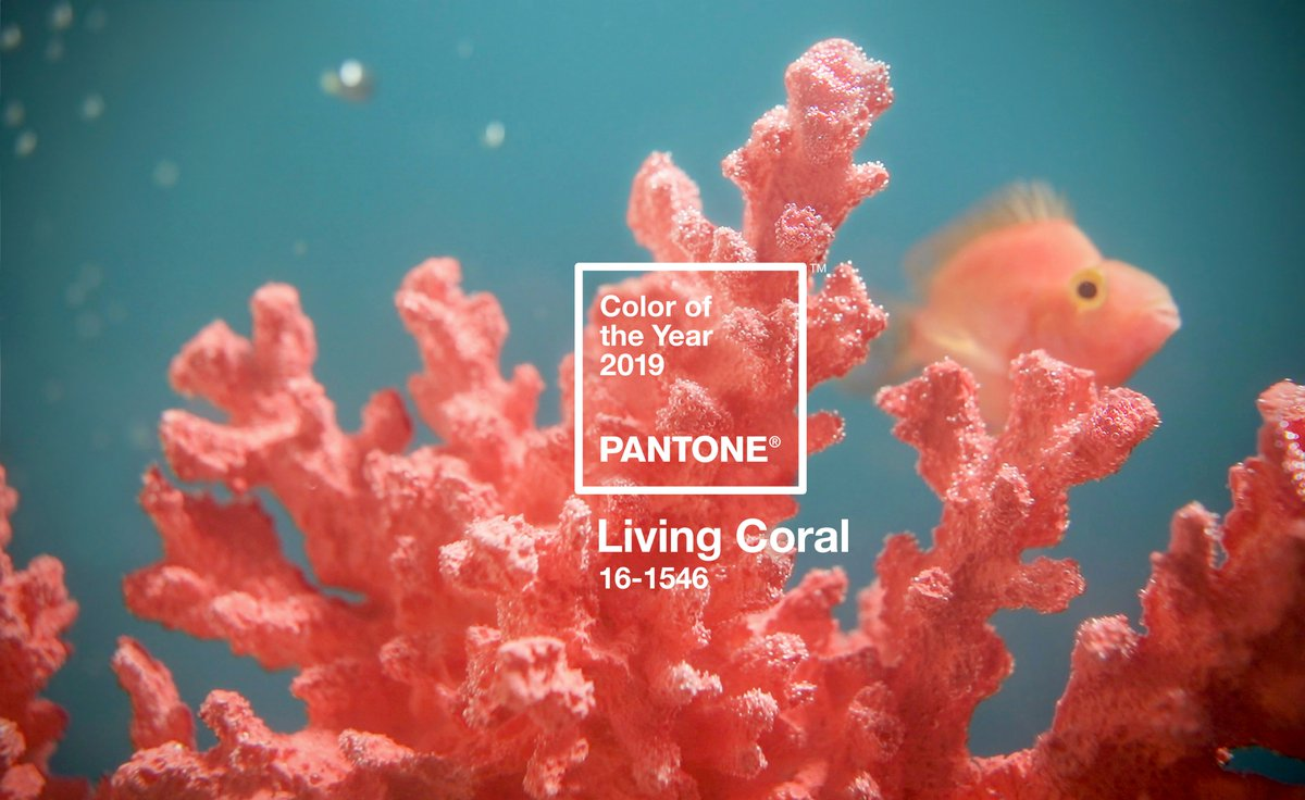 "Color Confidence on Twitter: ""The @pantone Color of the Year 2019 has been  announced! PANTONE 16-1546 Living Coral is an animating and life-affirming  coral gue with a golden undertone that energises and"