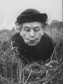 Born #onthisday 1883: Margaret Nice, U.S. ornithologist renowned for her detailed studies of song sparrows, who revolutionised the fields of ethology, life history, and behaviour 🇺🇸🐦 en.wikipedia.org/wiki/Margaret_… [1/4] #ornithology #birds