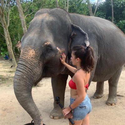 Amazing experience in Phuket Rescued elephants #greenelephantsanctuaryphuket pic.twitter.com/HGDeMVgyBG
