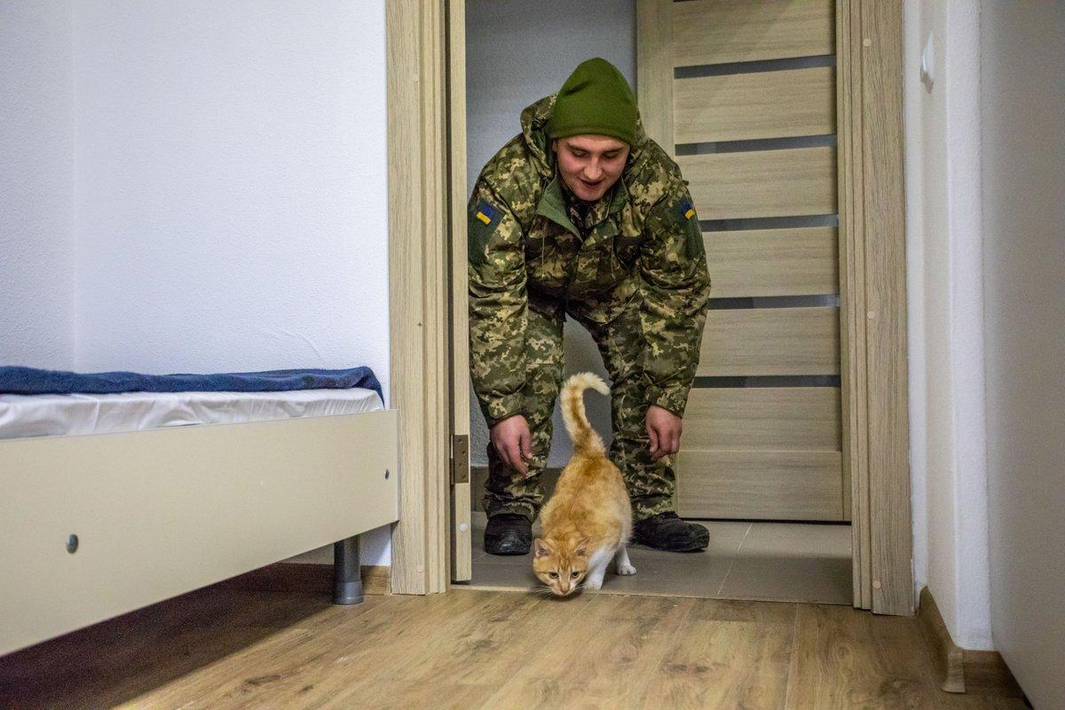 """""""Це - перший пост про кота у моїй стрічці"""": Порошенко показав """"мешканця"""" вже заселеного гуртожитку нового зразка для військових на Львівщині - Цензор.НЕТ 4272"""