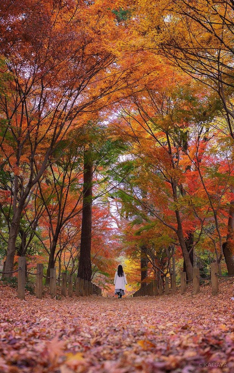 秋の色につつまれて。 (昨日、埼玉県にて撮影) 今日もお疲れさまでした。明日もおだやかな1日になりますように。