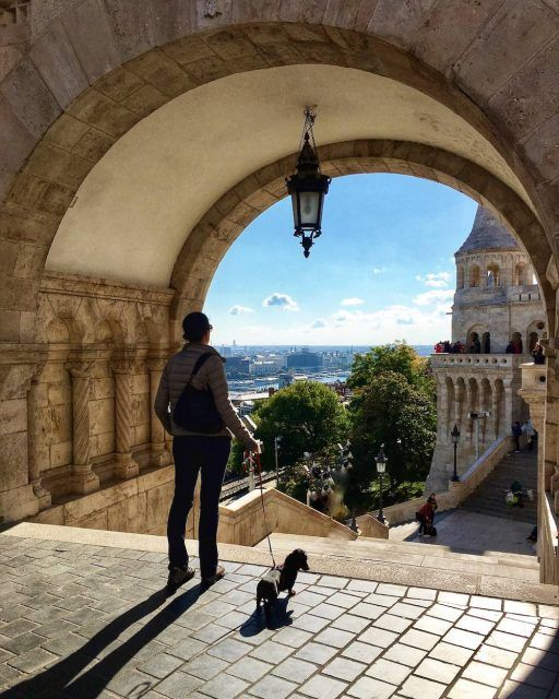Heading to Budapest with your pup? Check out my dog-friendly guide to Budapest first  https:// buff.ly/2AZK9Ke  &nbsp;   #budapest #dogtravel <br>http://pic.twitter.com/jAFIxvQAAm