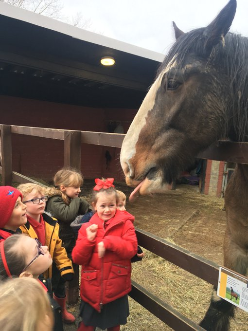 RT @MaundeneSchool: Year 2 even met a shire horse. He decided to share his dribble with us. @Hopfarm https://t.co/tZo8Sy6mNb