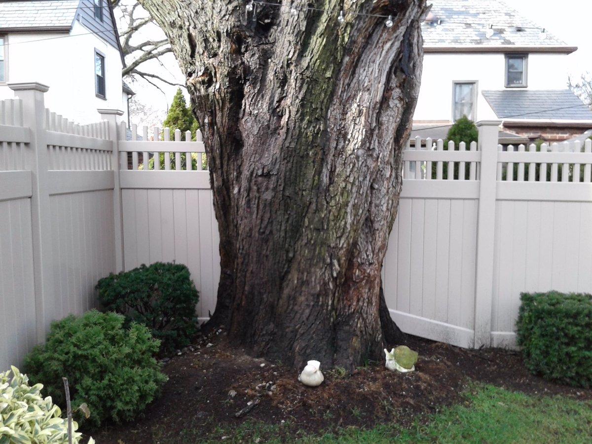 Longisland Longislandny Mineolany Trees Tree Fences Manufacturing Installation Pvcpic Twitter D4zdnigjcr