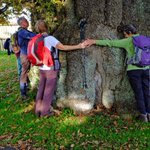 Join us on Saturday for a tree hug and a flour mill