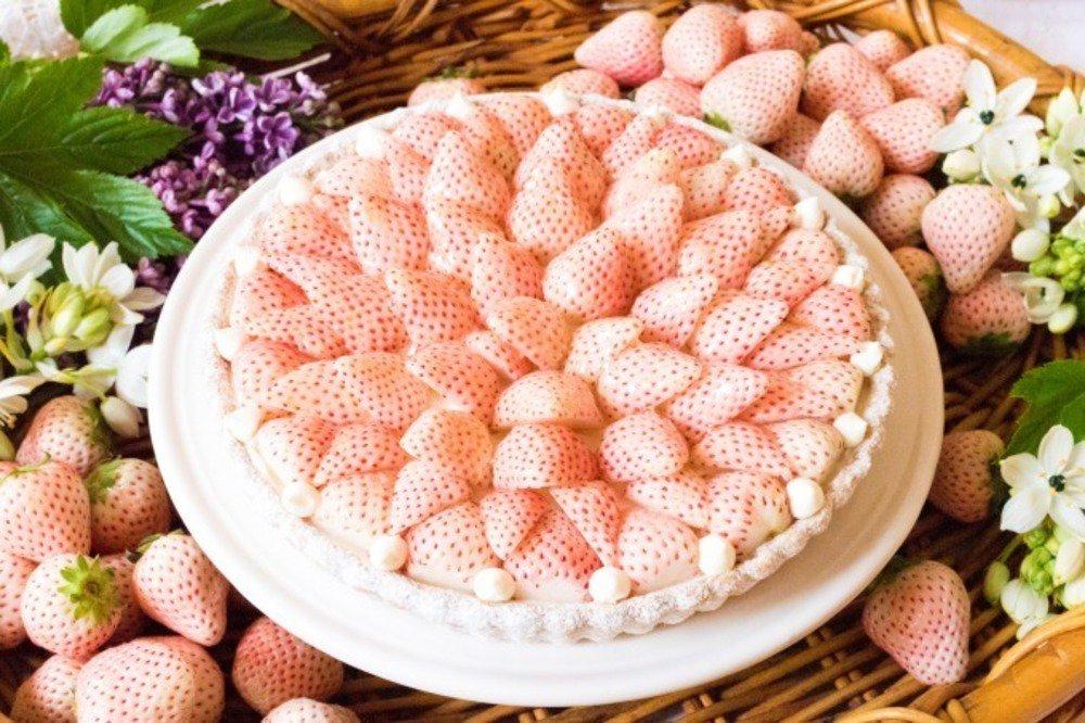白いちごのタルトが販売されるみたいだけど、ケーキにしたらめちゃくちゃ高いゾ!けどめっちゃ食べてみたい。