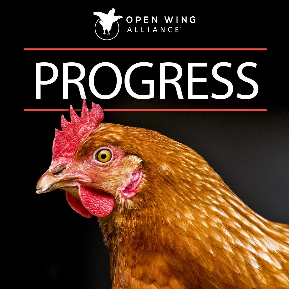 After less than 48 hours of an Open Wing Alliance campaign, @MarriottIntl has committed to banning cages that cruelly confine hens in its egg supply chain.  Animal Equality is a proud member of the Open Wing Alliance that is comprised of nearly 60 organizations. #progress