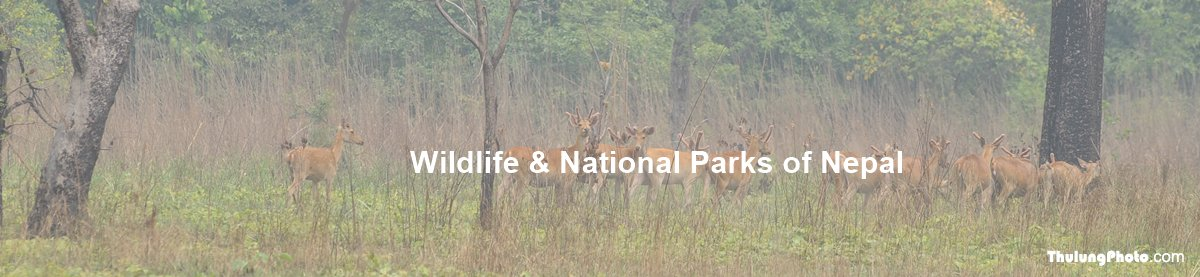 Widlife and National Parks