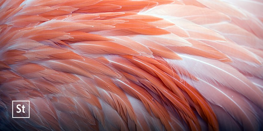 #LivingCoral is a nurturing color that appears in our natural surroundings and at the same time, displays a lively presence within social media. #COY2019 adobe.ly/2UkWIIZ