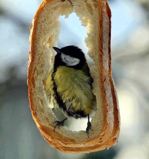 Прикольные картинки с птицами зимой, открытки