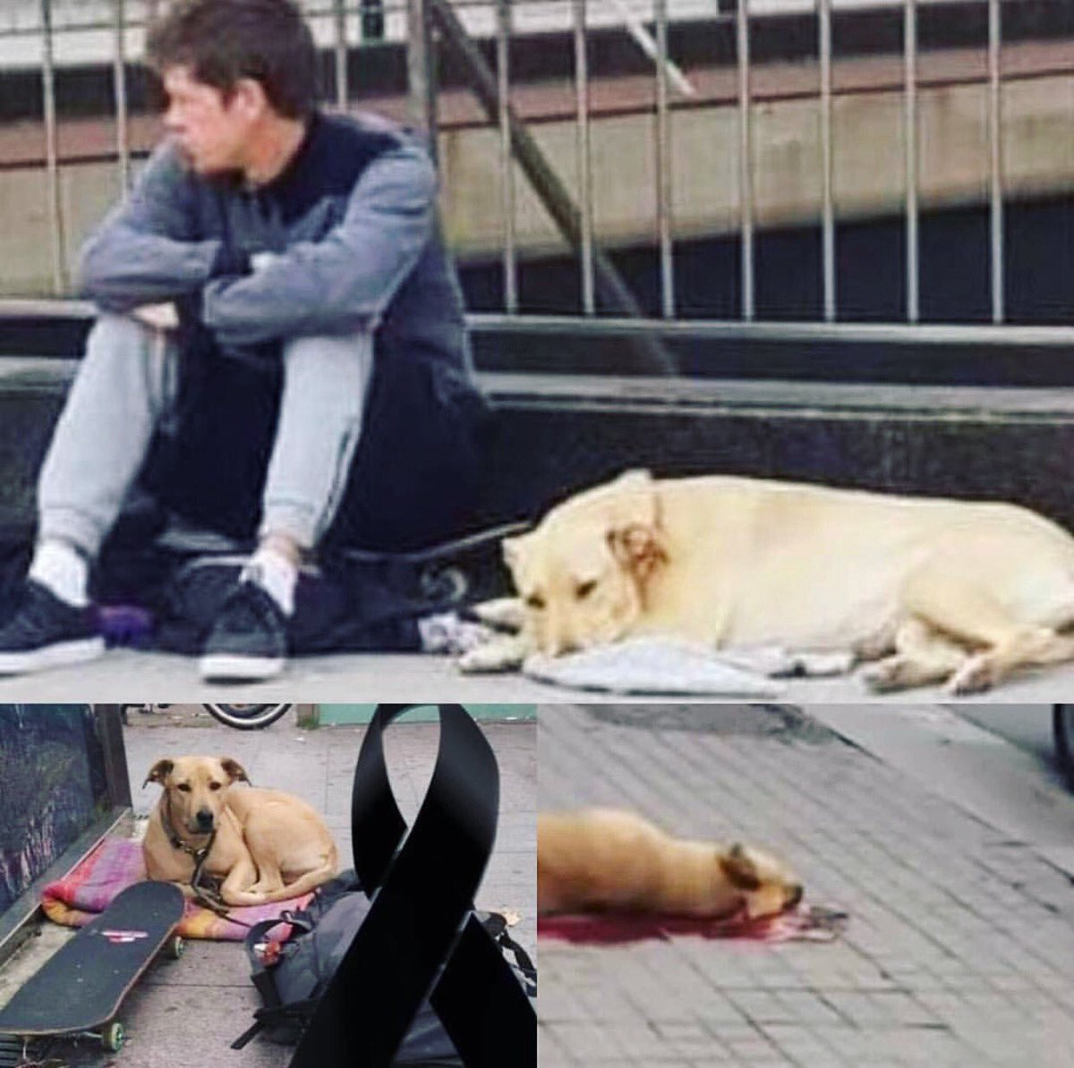 🚨#Barcelona, #Spain, at #hotelgranvia a homeless boy sleeps with his dog in the parking lot of the hotel. The managers were disturbed by their presence & called police & police shot the dog dead & arrested the boy.💔🐕 Share Far & Wide! Call For #JusticeforSota #JusticiaParaSota