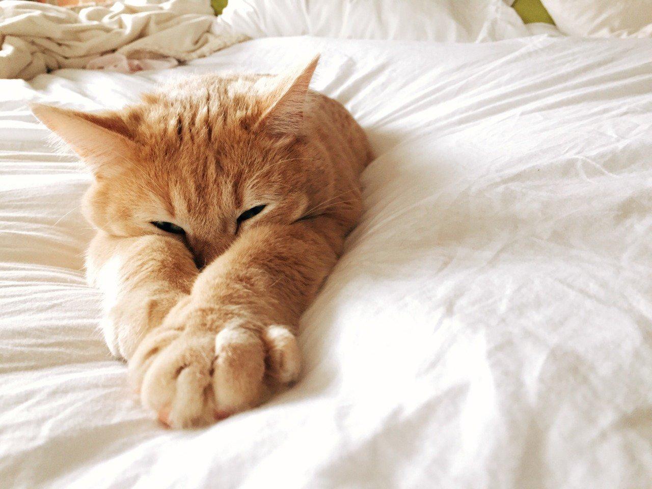 картинки красивые котенок проснулся