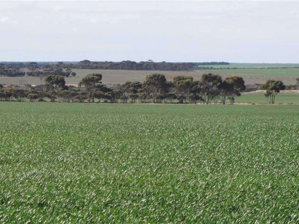 For Sale: Quality mixed farming enterprise in a 300 - 350mm rainfall area.  https://t.co/bxfB06HGME  #WesternAustralia #LakeKing #ForSale #FarmProperty https://t.co/A2NCgR9ZIG