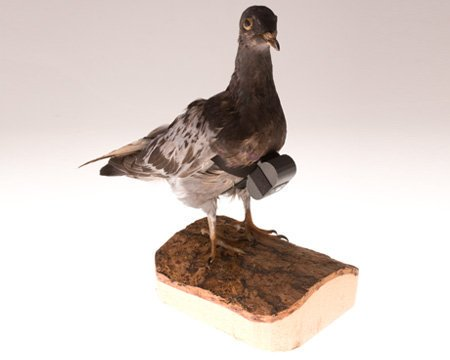 CIA #Museum Artifact of the Week: Pigeon Camera  Don't get the spy in your life a partridge in a pear tree. Get them a pigeon with a camera.  https://t.co/WAb6Fc36Gx