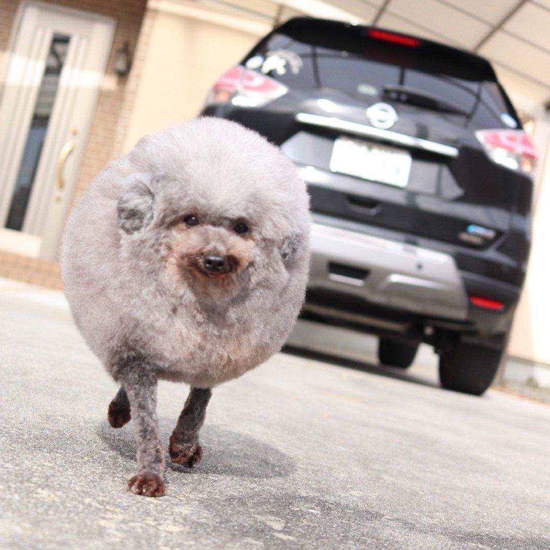 ヒルナンデスから電話 ー アメブロを更新しました #犬のいる生活 ameblo.jp/yorikokoro/ent…