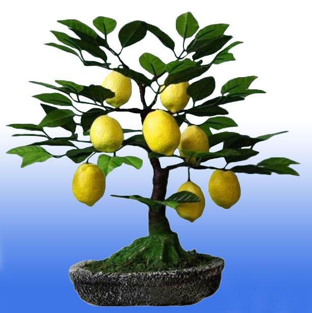 Картинка дерева с лимоном