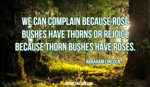 Anne Maria Yritys On Twitter We Can Complain Because Rose Bushes