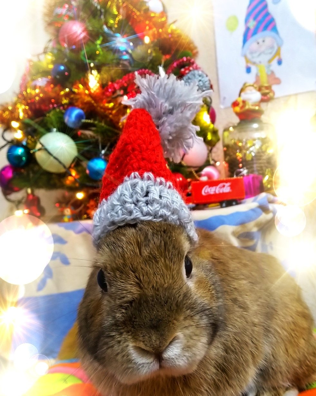 кролик новый год картинка
