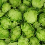 The Beauty of Hops #Infographic https://t.co/hgl6Fmo2FB