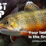 Image for the Tweet beginning: There's no trout that the