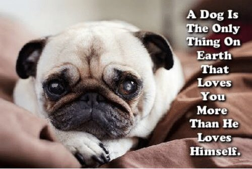 """A dog is the only thing on earth that loves you more than he loves himself."" Josh Billings"