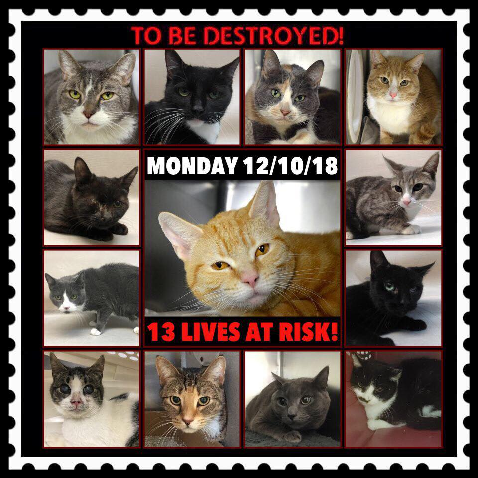 To view tonight's list click here: facebook.com/ACC.OfficialAt… To reserve an animal from the at risk list click here: newhope.shelterbuddy.com/Animal/List Further instructions, and a list of rescues can be found here: nycacc.org/get-involved/n…