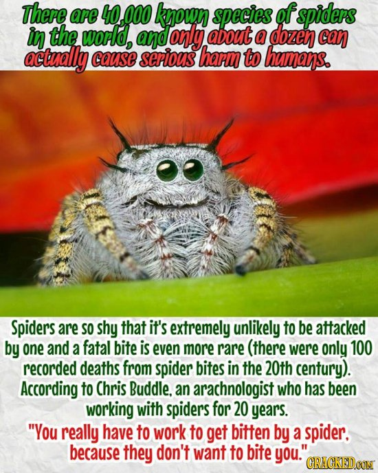 Be Nice To Spiders! 17 REAL Facts Hidden By The People Who Want You To Be Scared - https://t.co/zlaZaDY8Ch