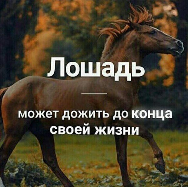 A horse can live to the end of its life