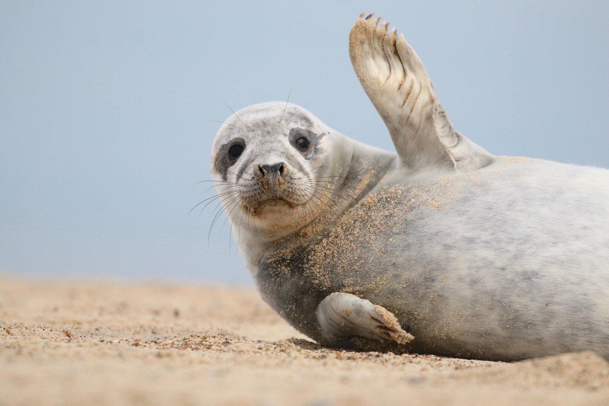 Тюлень фото приколы