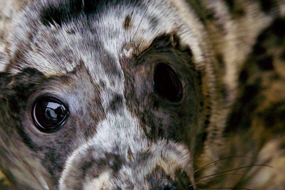 Seal Rescue Ireland on Twitter: