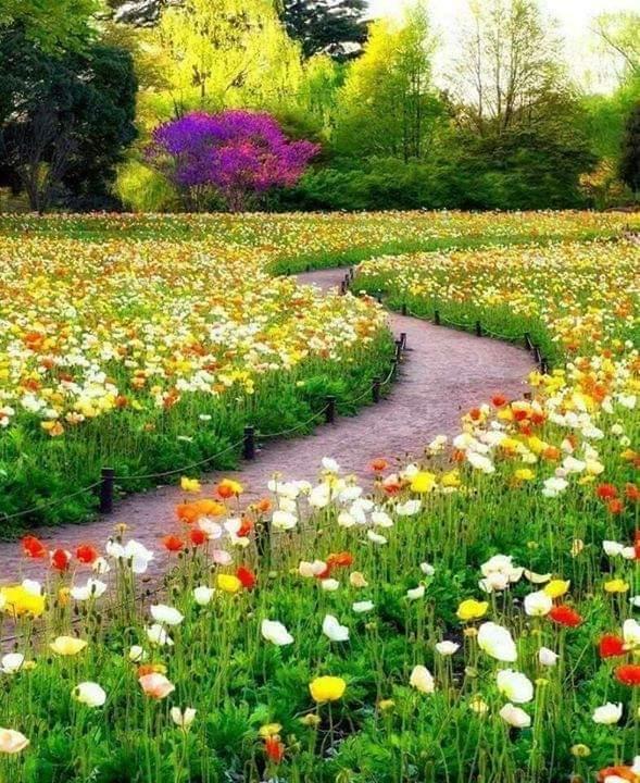 Hello dear friends.  Have a beautiful Monday...  <br>http://pic.twitter.com/2fKRTbmdqR
