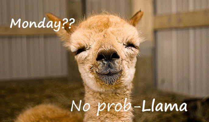 Monday?,Let´s do this No Pro-Llama #MondayMotivation @CampsInt
