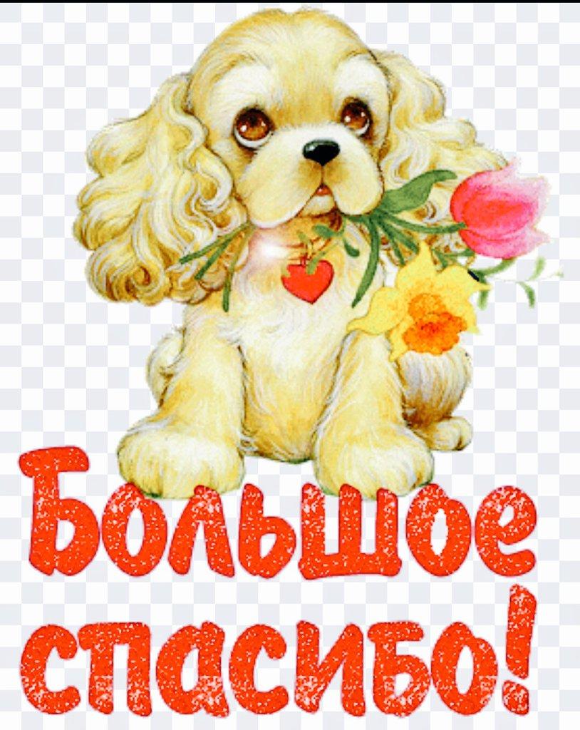 Картинки с животными и надписями спасибо