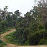 We're looking for a Post Doctoral Research Associate to explore the plant biodiversity of the understudied Seasonal Forests of Wallacea, Indonesia. Find out more and apply: https://t.co/Ib4IZzVj9F