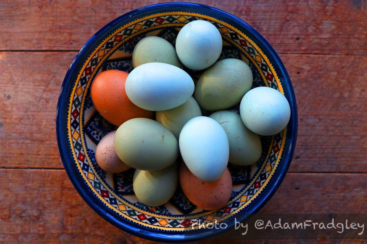 A colourful shot of blue & brown hen eggs in a Lebanese dish viewed from above