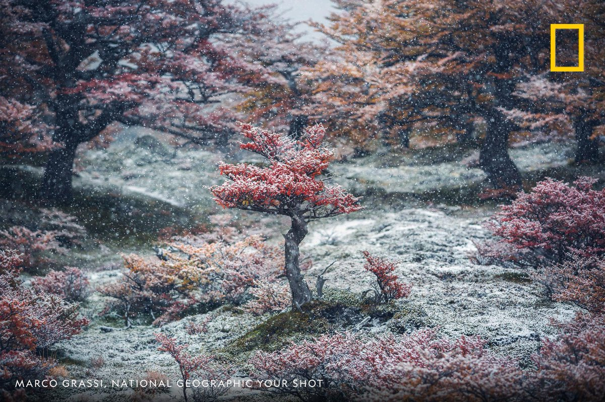"""Does this wintry scene captured by Your Shot photographer Marco Grassi inspire you as much as it inspires us? Write a """"holiday haiku"""" about this photo for a chance to be published. https://on.natgeo.com/2zSFJoL"""