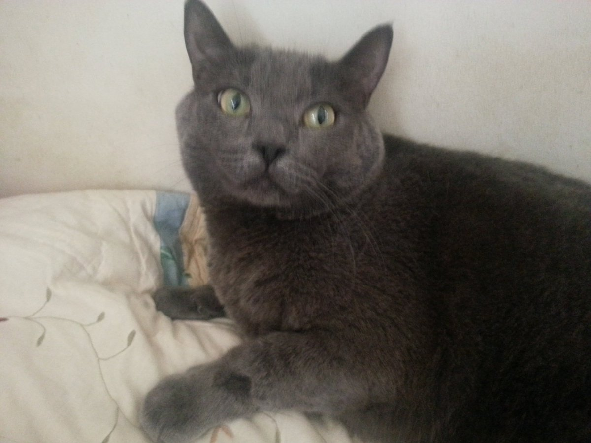LOL a Guy told Us that Kona [my cat] looks like the cat from Pet Sematary movie. <br>http://pic.twitter.com/4hzvd3Otze