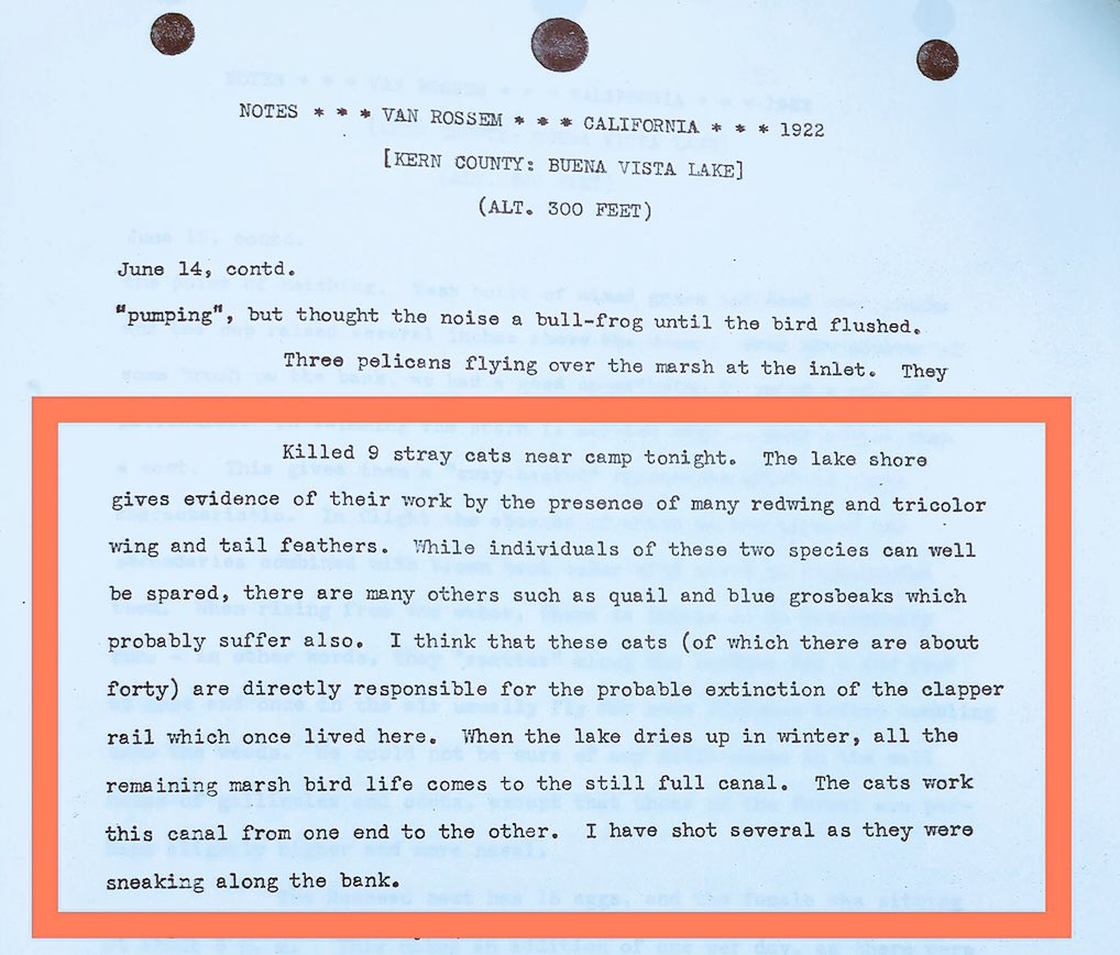 In 1922 van Rossem reports shooting nine feral cats at Buena Vista Lake, CA, which were responsible for killing (now endangered) tricolored blackbirds & (he thought) clapper rails