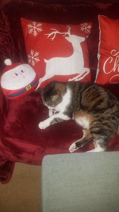 My Christmas kitty https://t.co/aHE32M7n8O