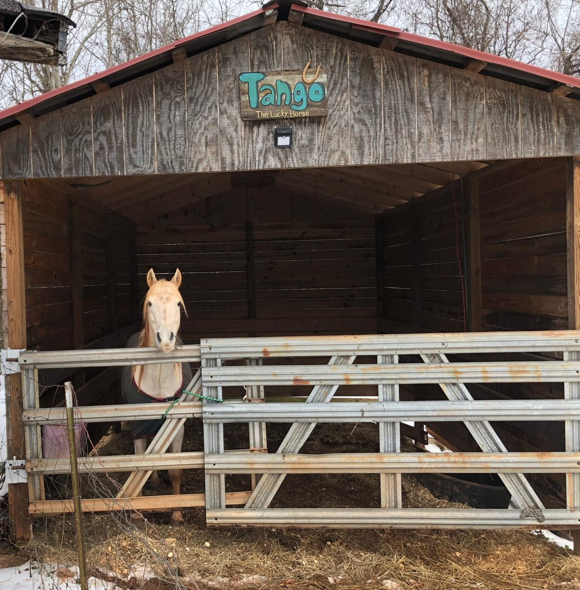 HORF UPDATE hes in the barn daddy built for him and is surviving snowmageddon, thanks to the gate dad rigged to keep Tangos dumbass in there