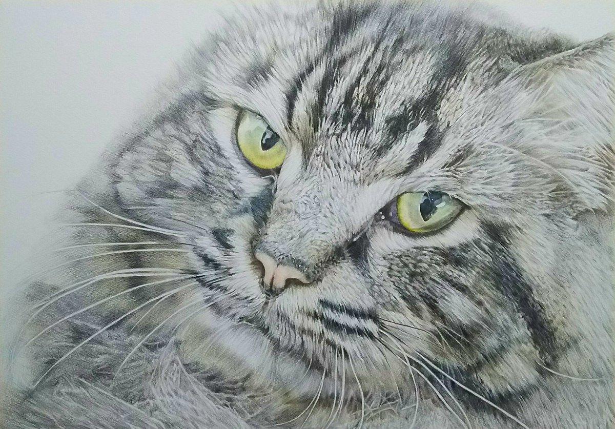 個展の目玉作品として描いた A2サイズ 色鉛筆画 色鉛筆 三菱