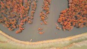 xinhua china anhui laian pond cypress scenery scenery - 900×506