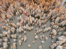xinhua china anhui laian pond cypress scenery scenery - 900×675