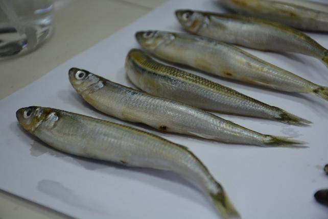 Karadeniz'deki 2 balık türünde hastalık yapan parazit tespit edildi cumhuriyet.com.tr/haber/turkiye/…