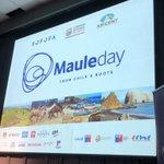 #MauleDay Twitter Photo